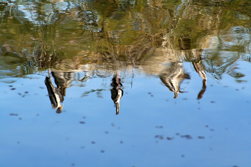 Reflections of the Storks