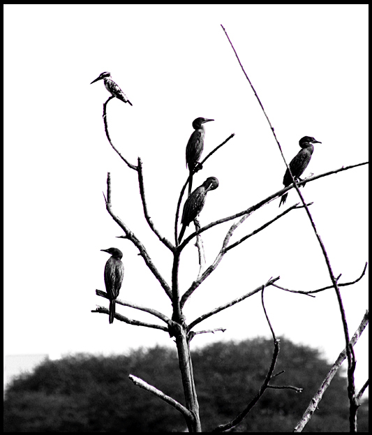 Birds at Lotus Pond