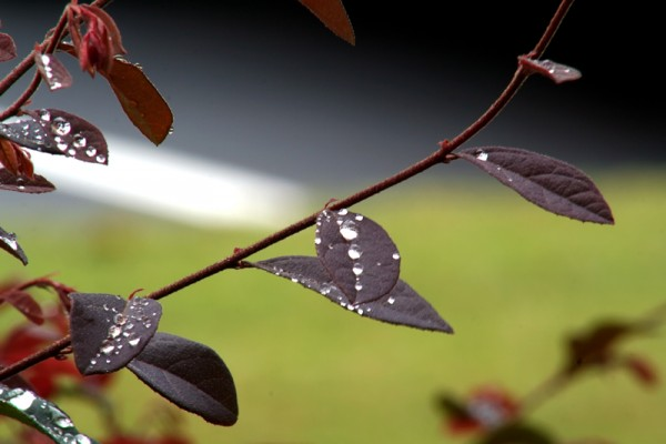 Rain drops on leaves!