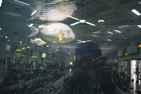 airport passenger aquarium fish Cochin reflection
