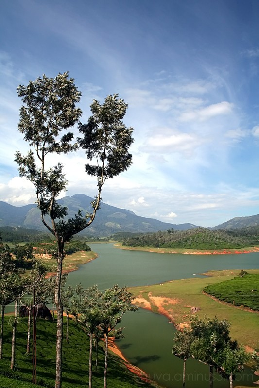 Munnar lake tree tea plantation Kerala