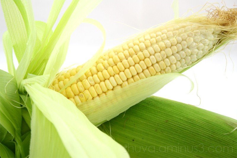 Maize corn closeup
