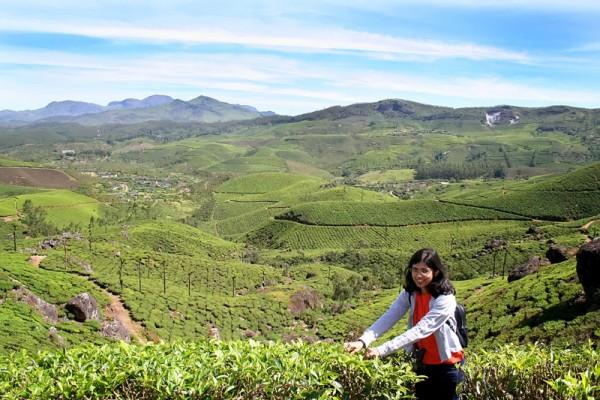 Munnar Tea plantation