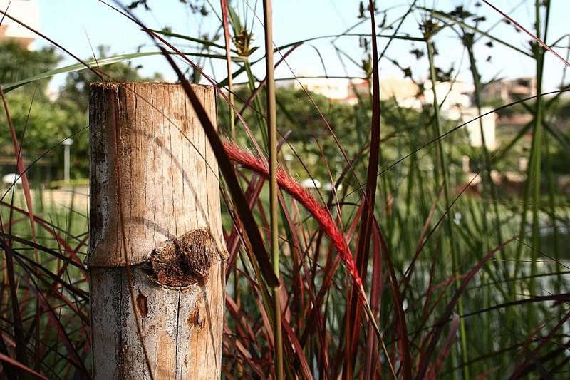 Field nature evening grass