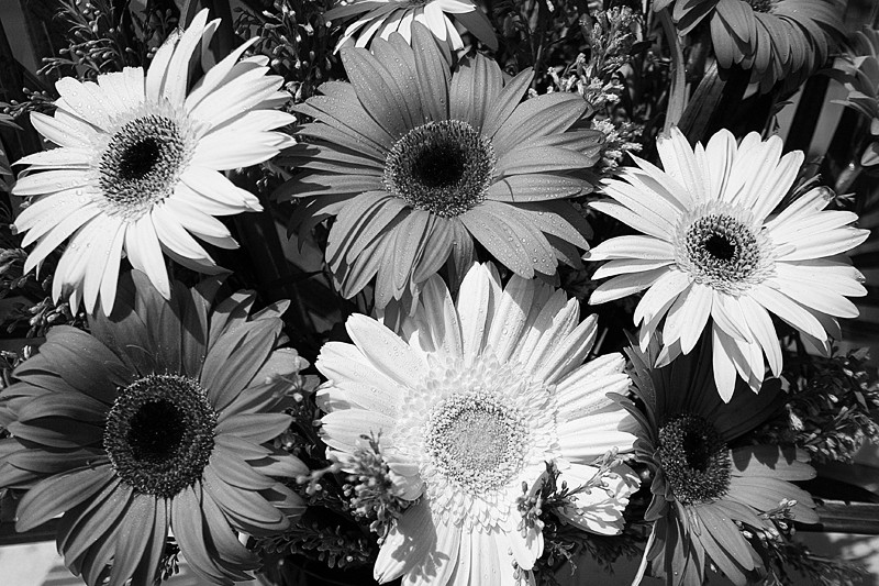 Gerbera flower b/w bouquet