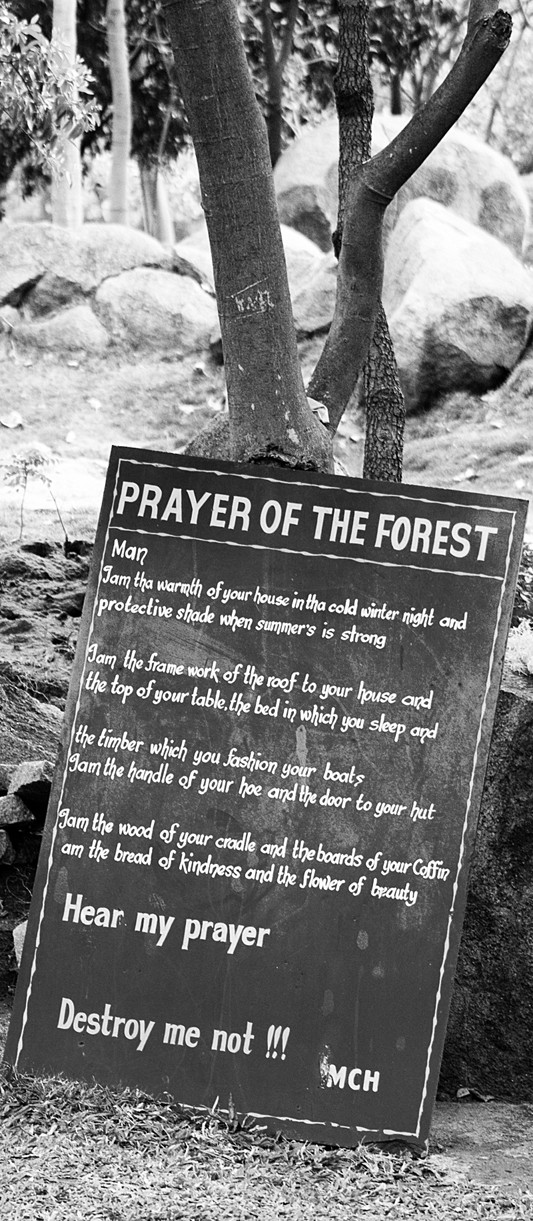Prayer of the forest