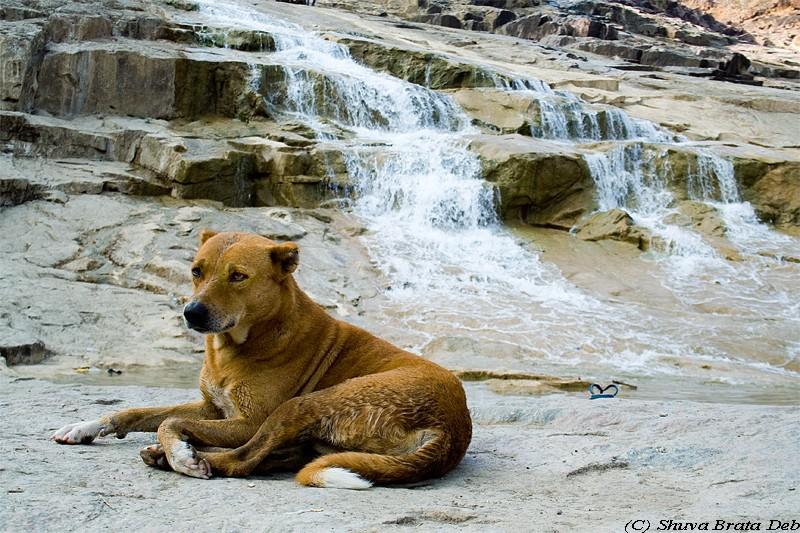 A dog enjoying Kuntala waterfalls andhra pradesh