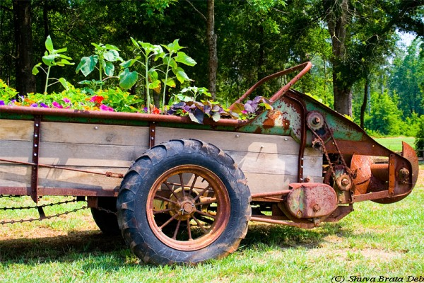 Flowers in old rusted cart