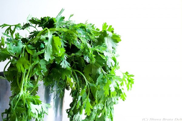Last Sunday's Lunch II: Coriander Leaves