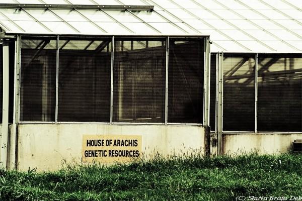House of Arachis