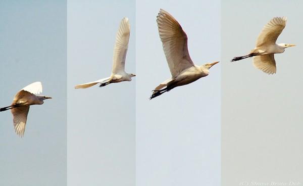 Bird flight sequence