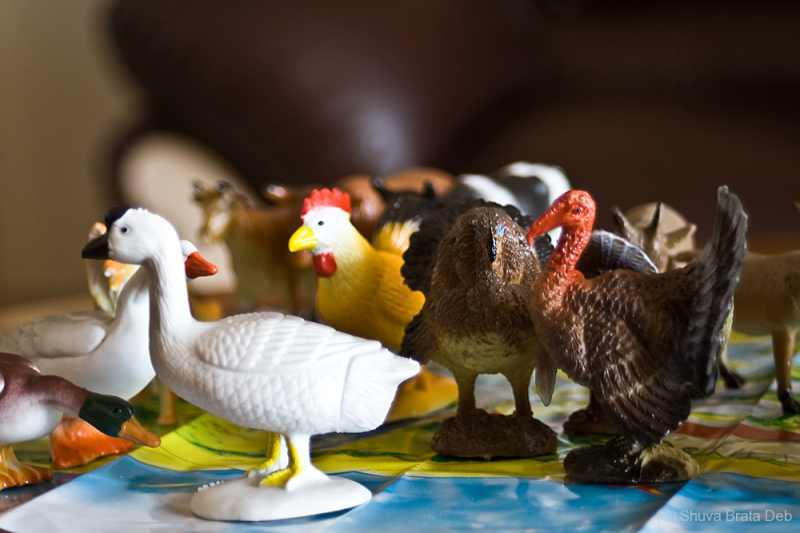 The toy farm