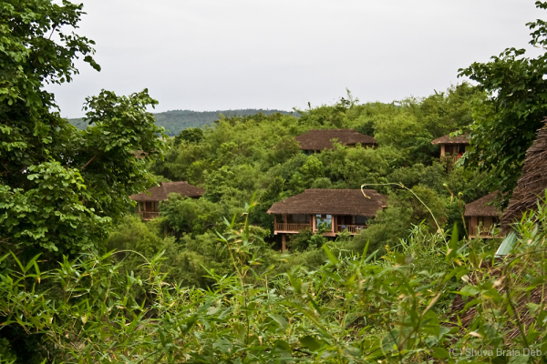 River Tern Jungle Lodge