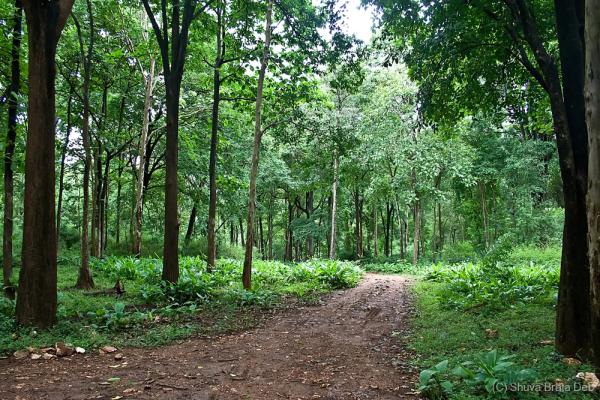 Safari tracks at Bhadra Wildlife Santuary