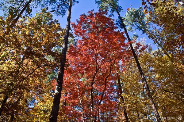 Fall colors @ Umstead State Park