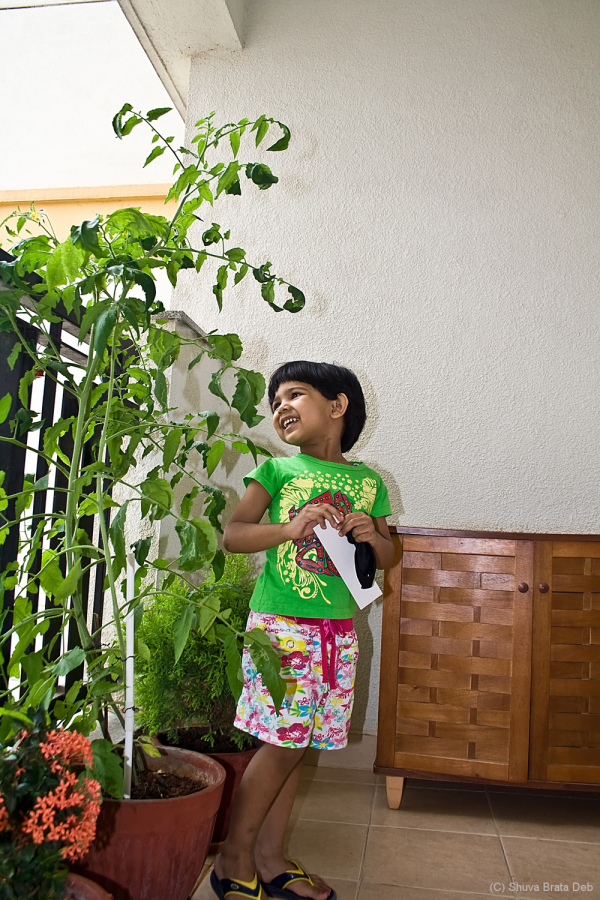 Home gardening II