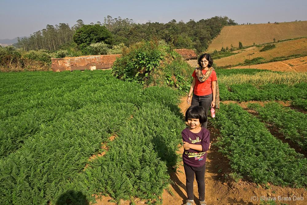 Trekking through carrot fields