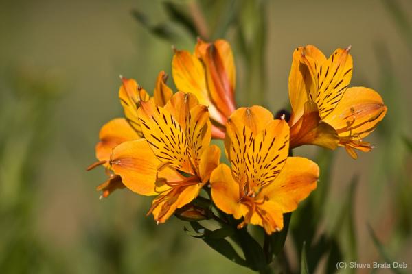 Flowers of RedHills Nature Resort