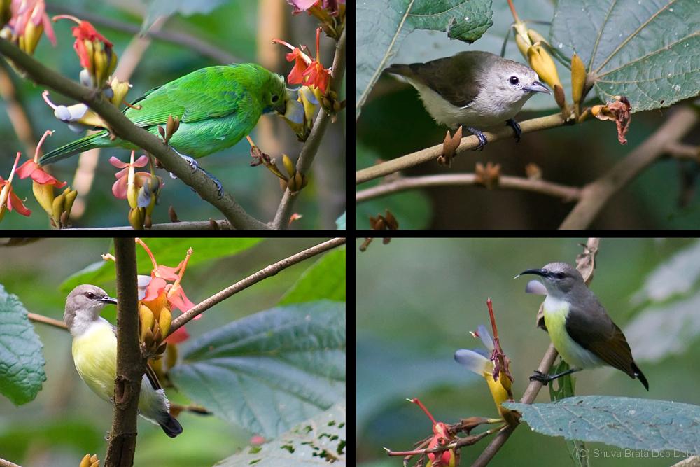 Bird Watching @ Jungle Lodge