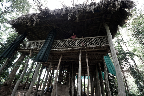 Tree house stay