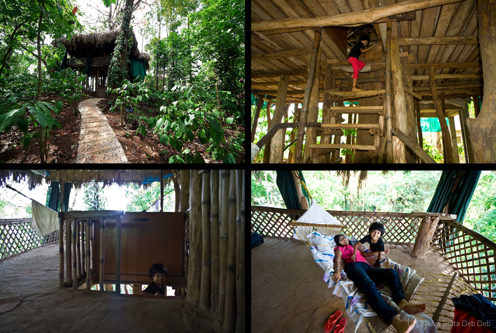 The tree house stay