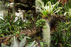 Parasitic plants in a green house