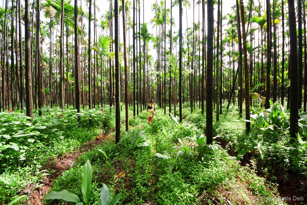 Agumbe #10: Walk at the plantation