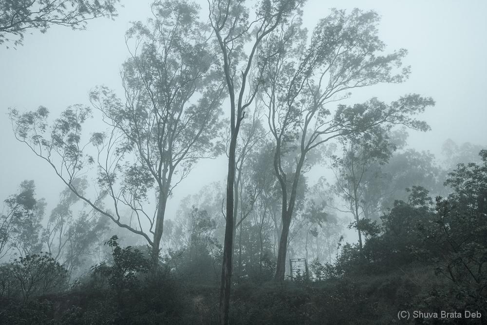 Foggy morning at Nandi Hills