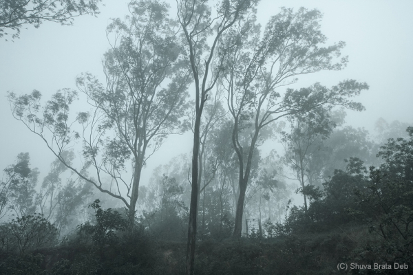Foggy morning at Nandi Hills