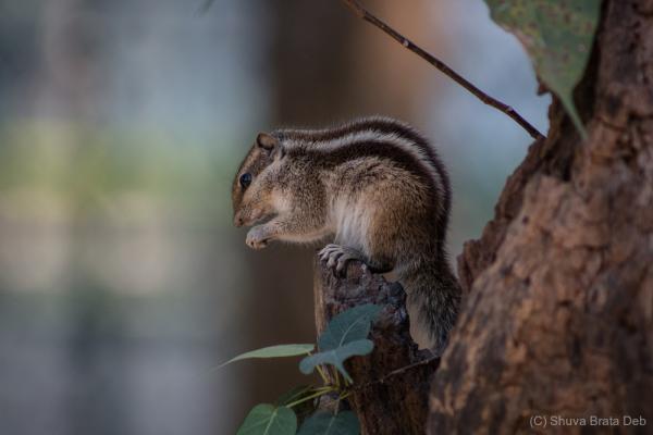 Ah, meet Mr Squirrel (may be Mrs, I dunno)