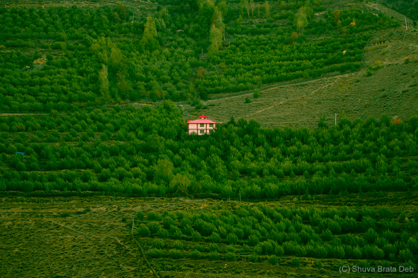 A bungalow within apple trees