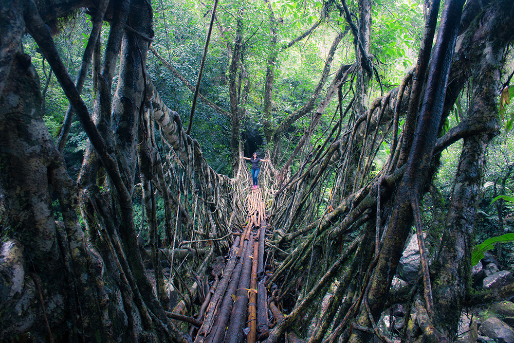 Crossing Rubber root bridge