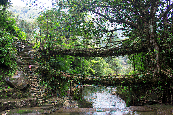 Little girl and Double Decker Living root bridge