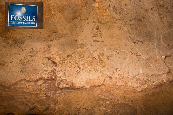 Fossils inside Arwah Cave, Cherrapunjee