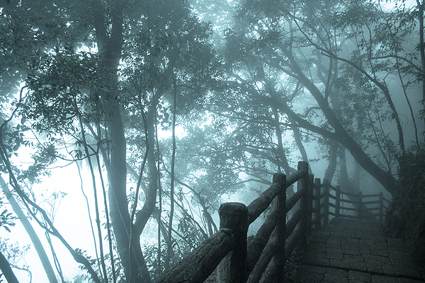 Walk in the fog