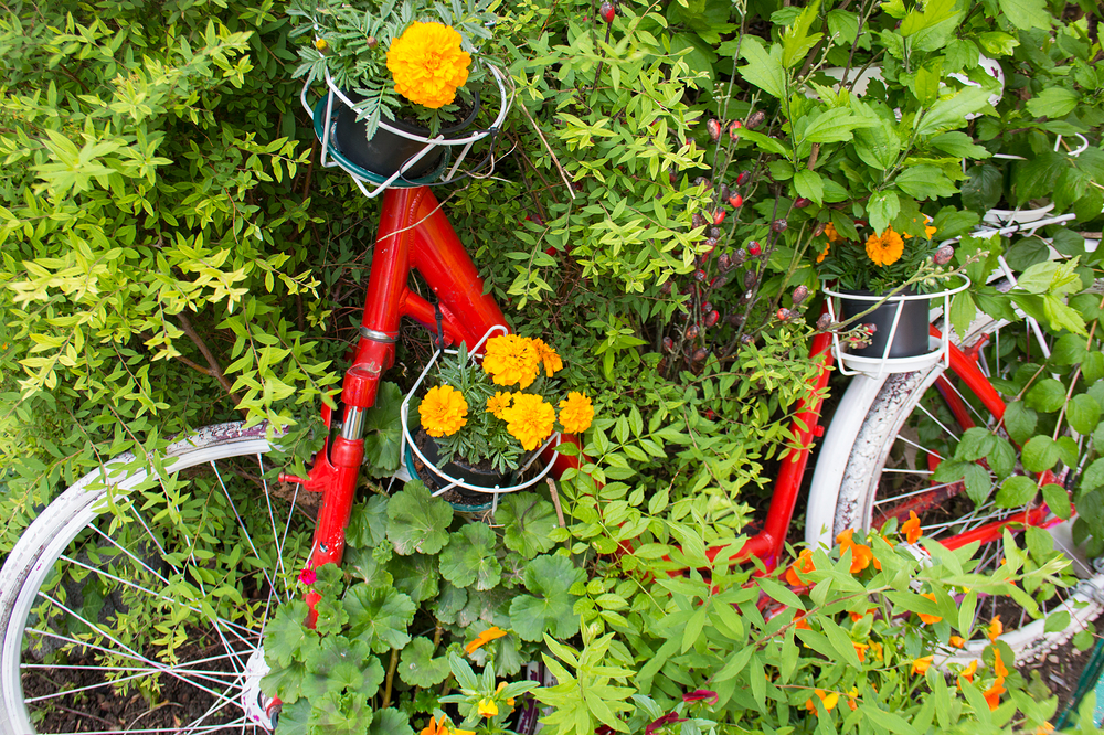 Cycle witnessses the lifecycle of plants