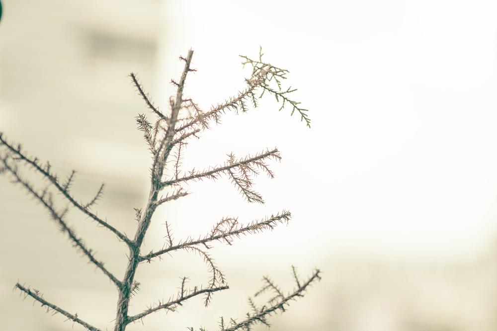 plant dry autumn