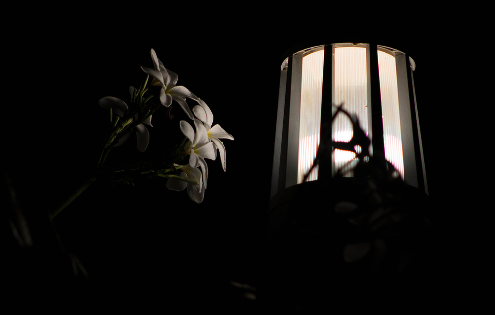FAN - Flowers At Night - II (Plumeria)