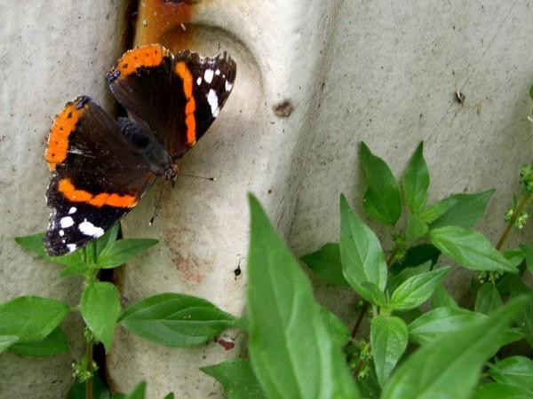 My friend the butterfly