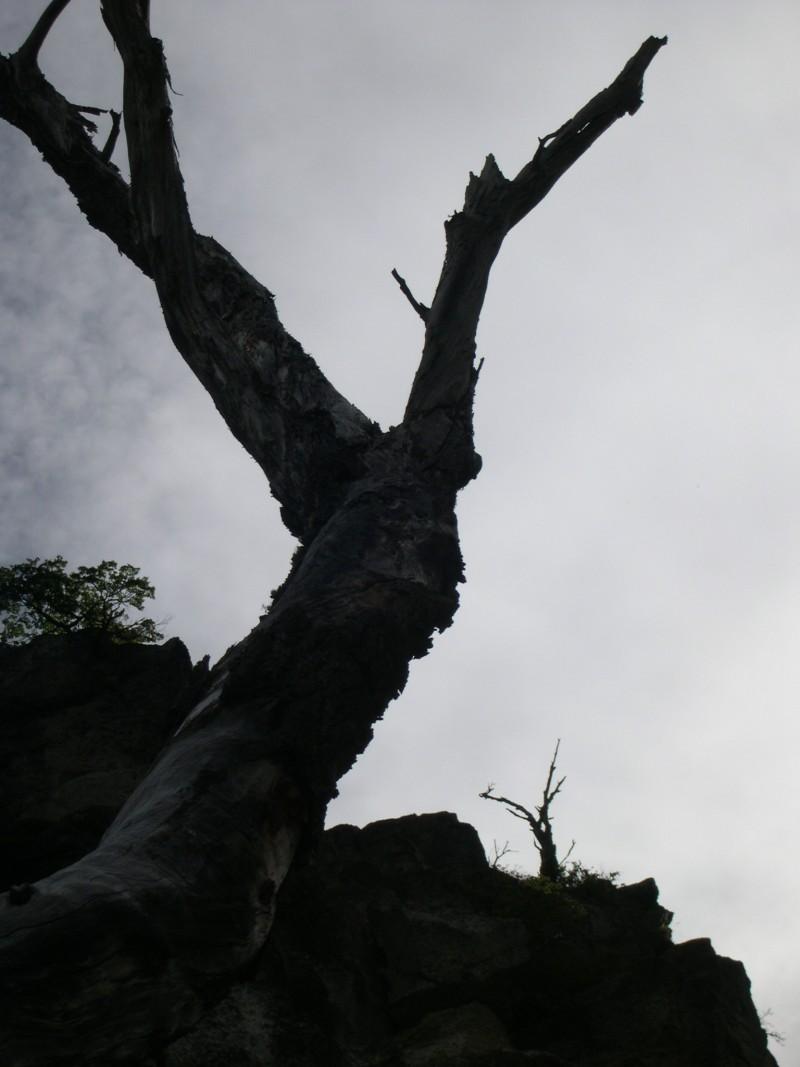 The 2 strange trees