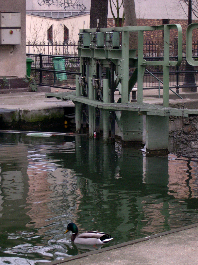 The duck and the lock