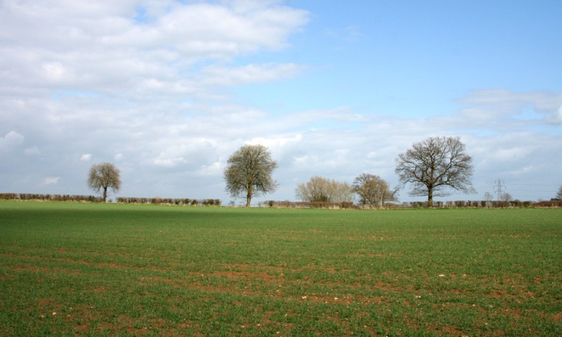 3 trees in a field