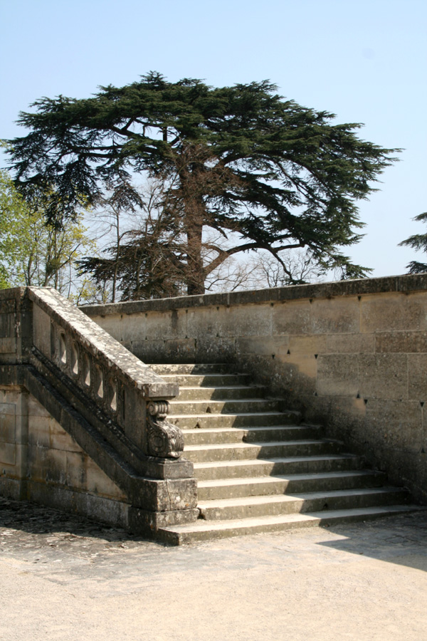 The tree and the stair