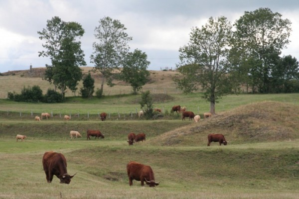 Welcome in cows land