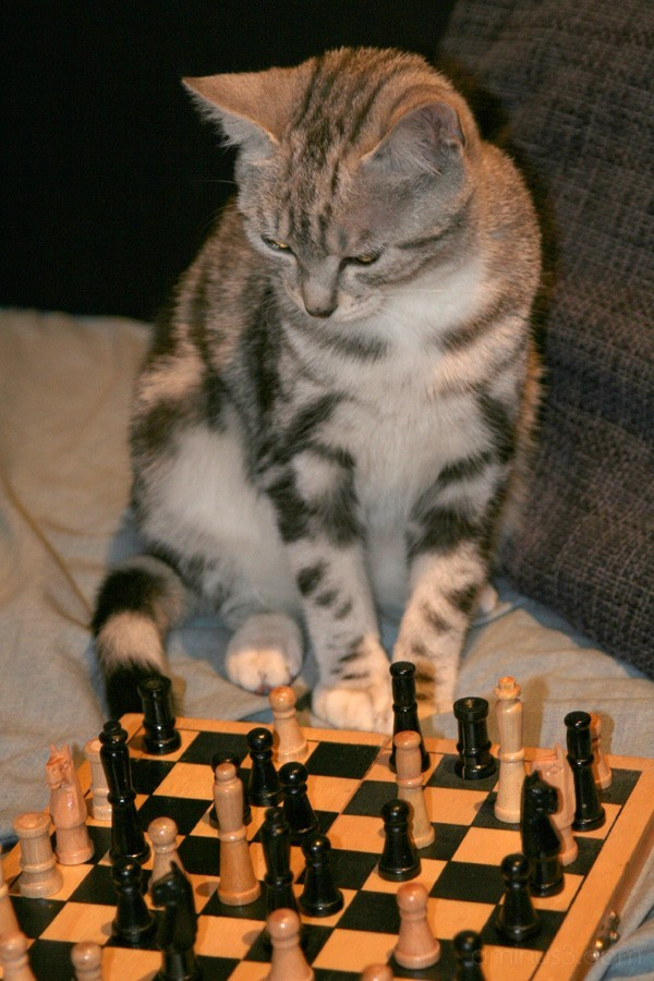 Chat, cat, checkmate