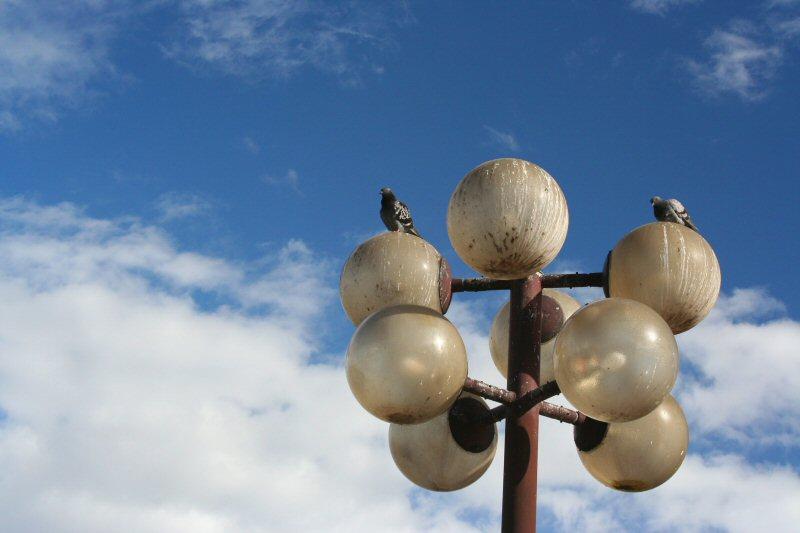 Pigeons orbs.
