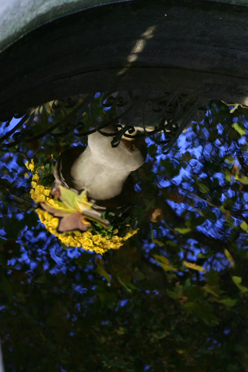 Flowers in Jardin du Luxembourg.