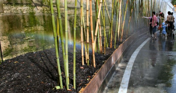 Paris-plage : bamboos in asphalte