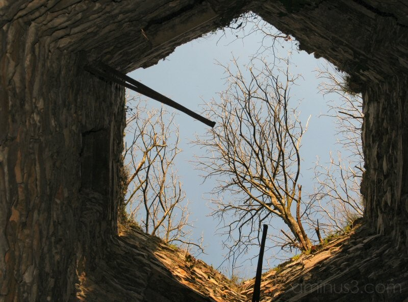 Tree through well
