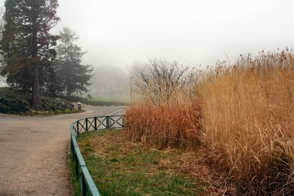 Fog in the park II